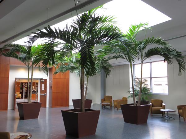Palm trees in Monninger Center Atrium